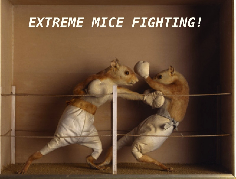 Extreme Mice Fighting